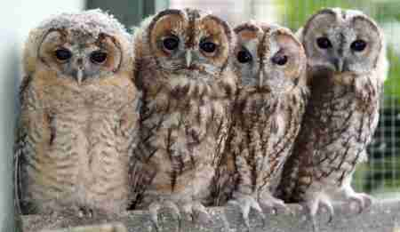 Owlets toddler session