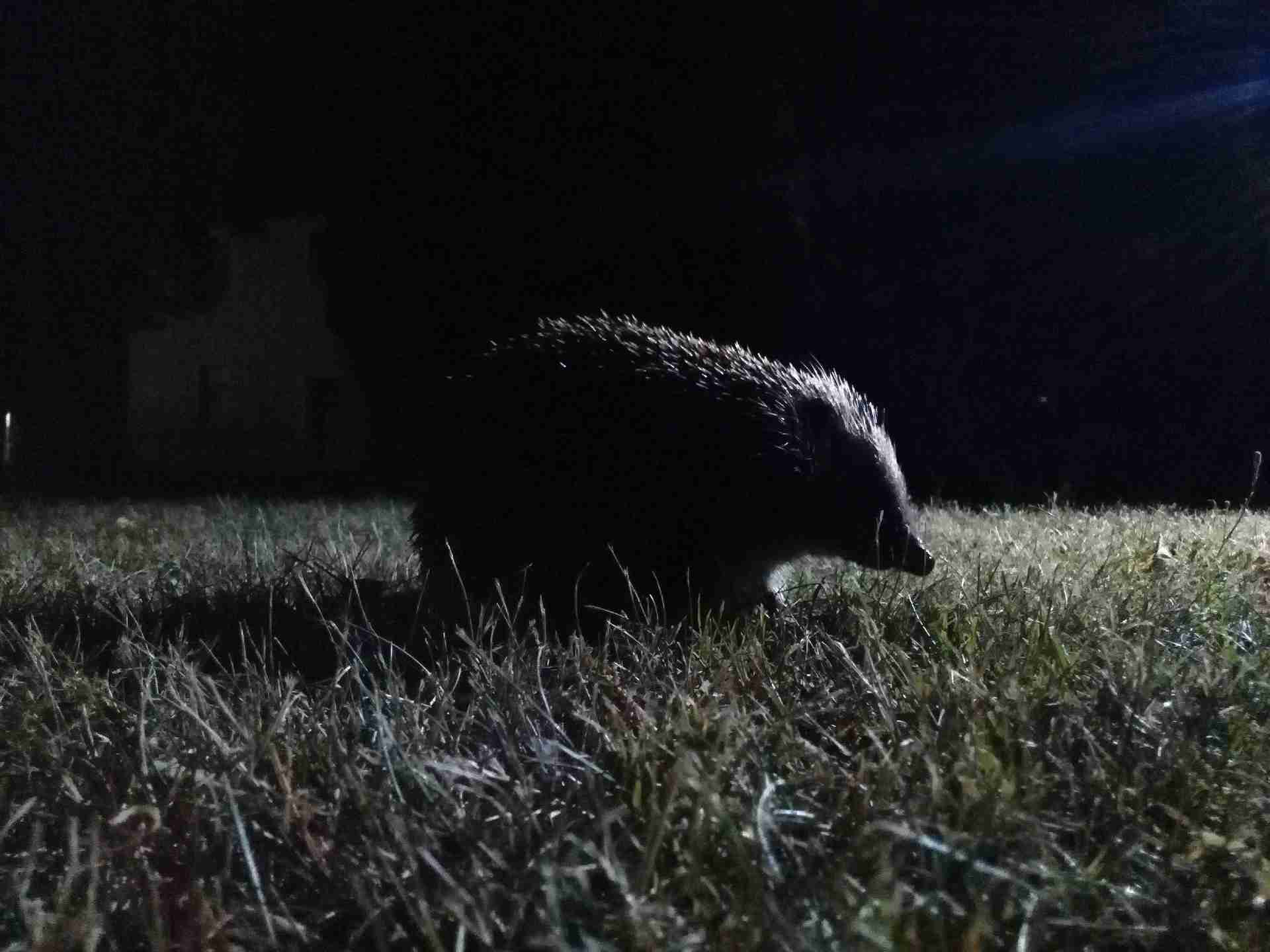 Don't Forget About Vulnerable Wildlife this Bonfire Night