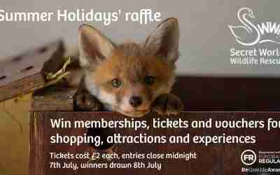 Our Summer Holidays raffle is now live!