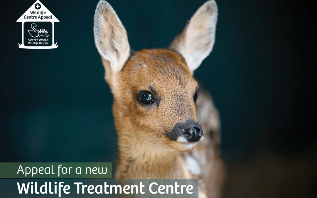 The Last Push appeal for our new wildlife treatment centre